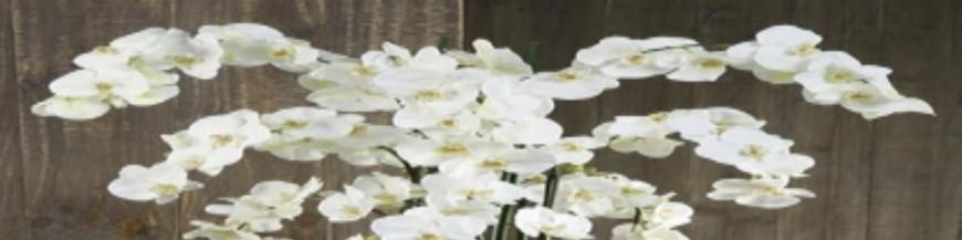 Plantes artificials