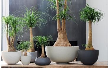 Consejos para las plantas